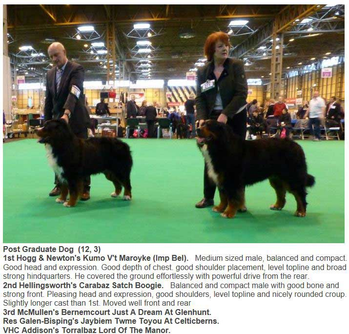 Bear Line Up 2nd Place Crufts 2014