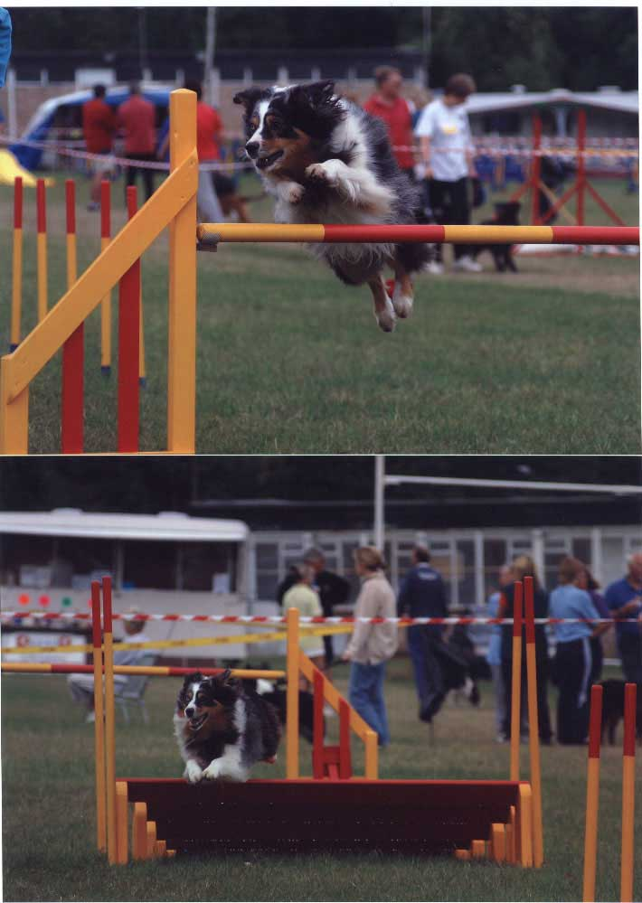 Jay on an agility course