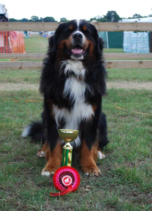 Tolly's Obedience Award 2013